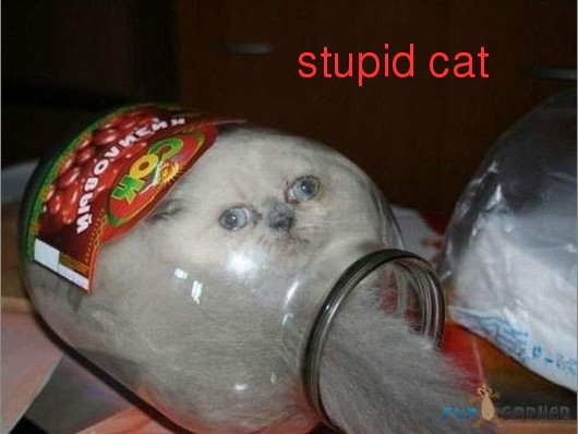 Funny-Animals-stupid-cat